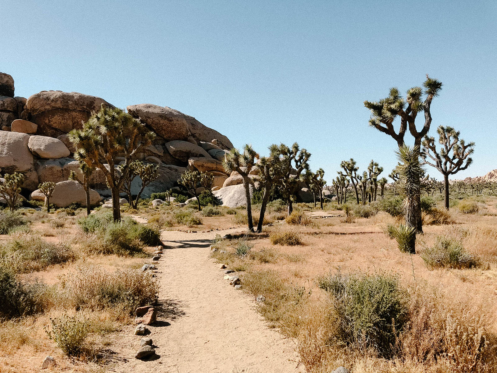 hall-of-horrors-joshua-tree