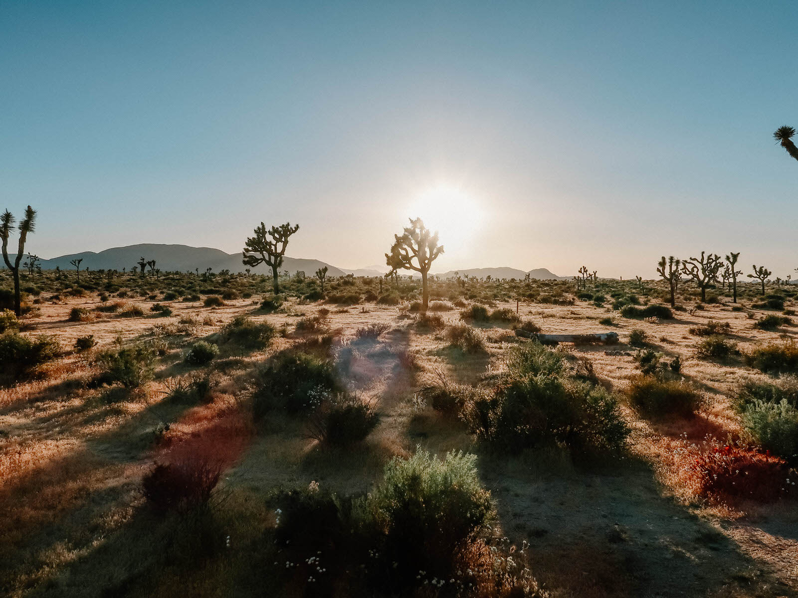 joshua-tree-weekend-guide