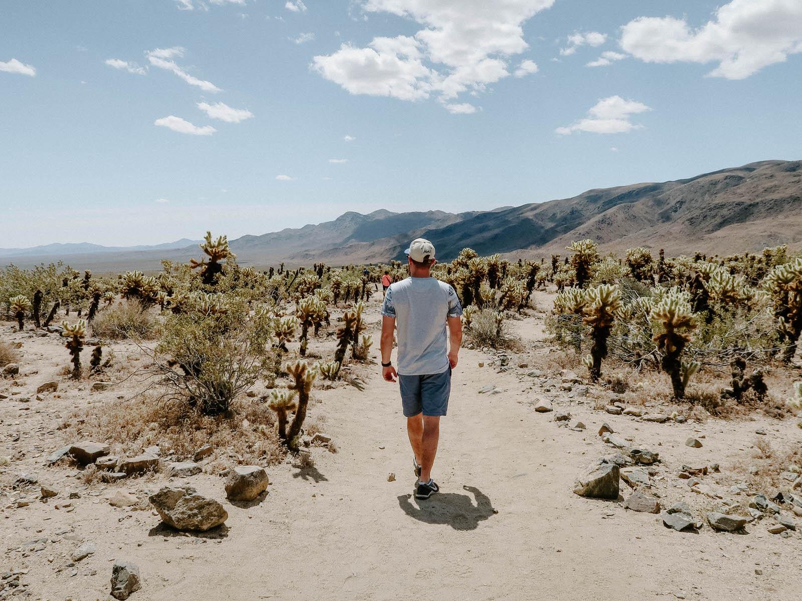 cholla-cactus-farm