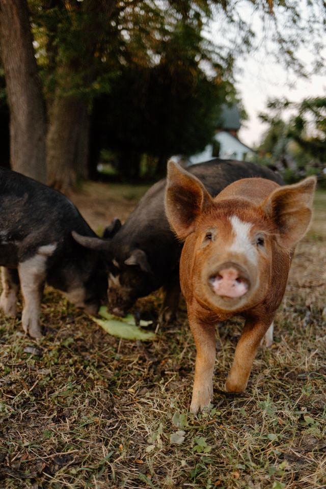 hen and harrow farm clarksburg